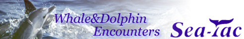 Whale&Dolphin Encounters